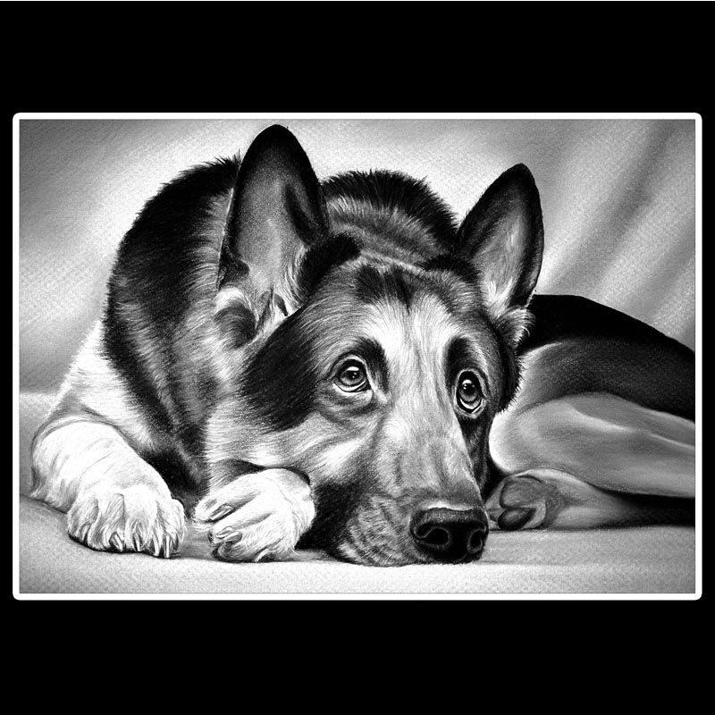 Снимок собаки