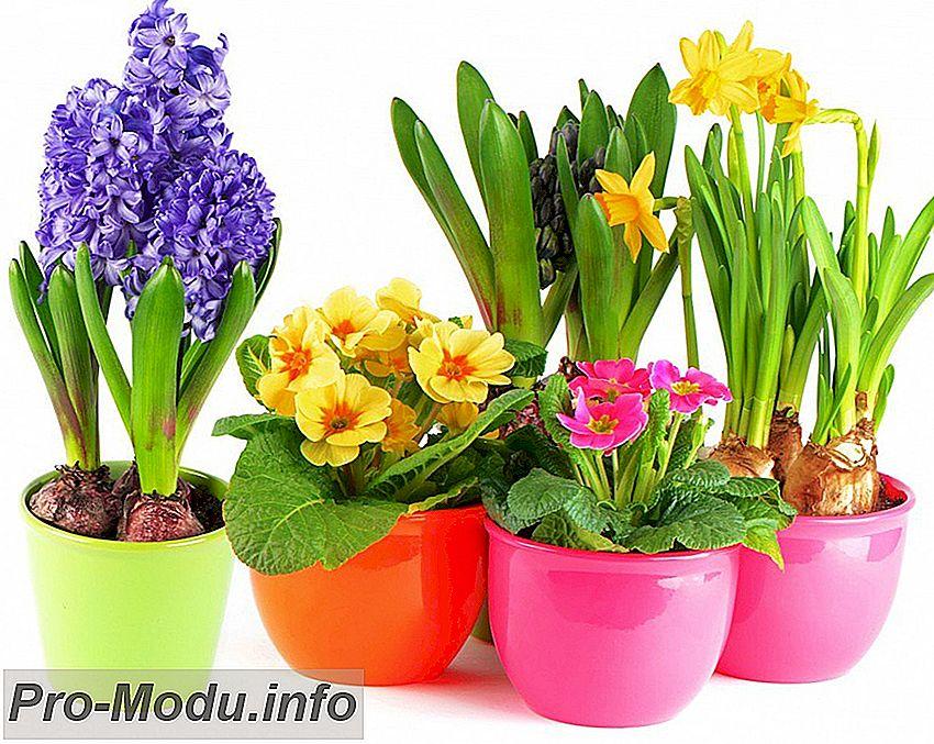 Какие цветы нельзя держать дома?