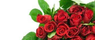 Розы: как долго сохранить свежесть