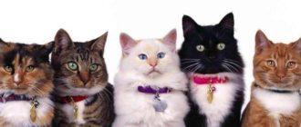 Самые умные породы кошек: Рейтинг разумных и осознанных животных