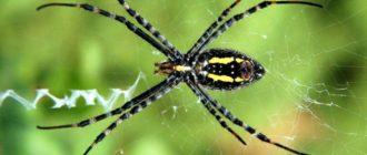 Самые опасные пауки в мире: ТОП-10