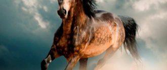 Самые красивые лошади: Описание пород и фото необыкновенных созданий