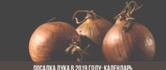 Посадка лука в 2019 году: календарь