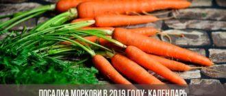 Посадка моркови в 2019 году: календарь