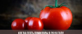 Посадка помидор на рассаду и в теплицу в 2019 году